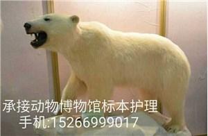北极熊标本修补